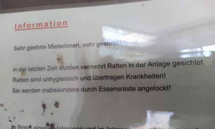 """Lenzsiedlung: """"Rattenbefall? Keine Ahnung"""""""